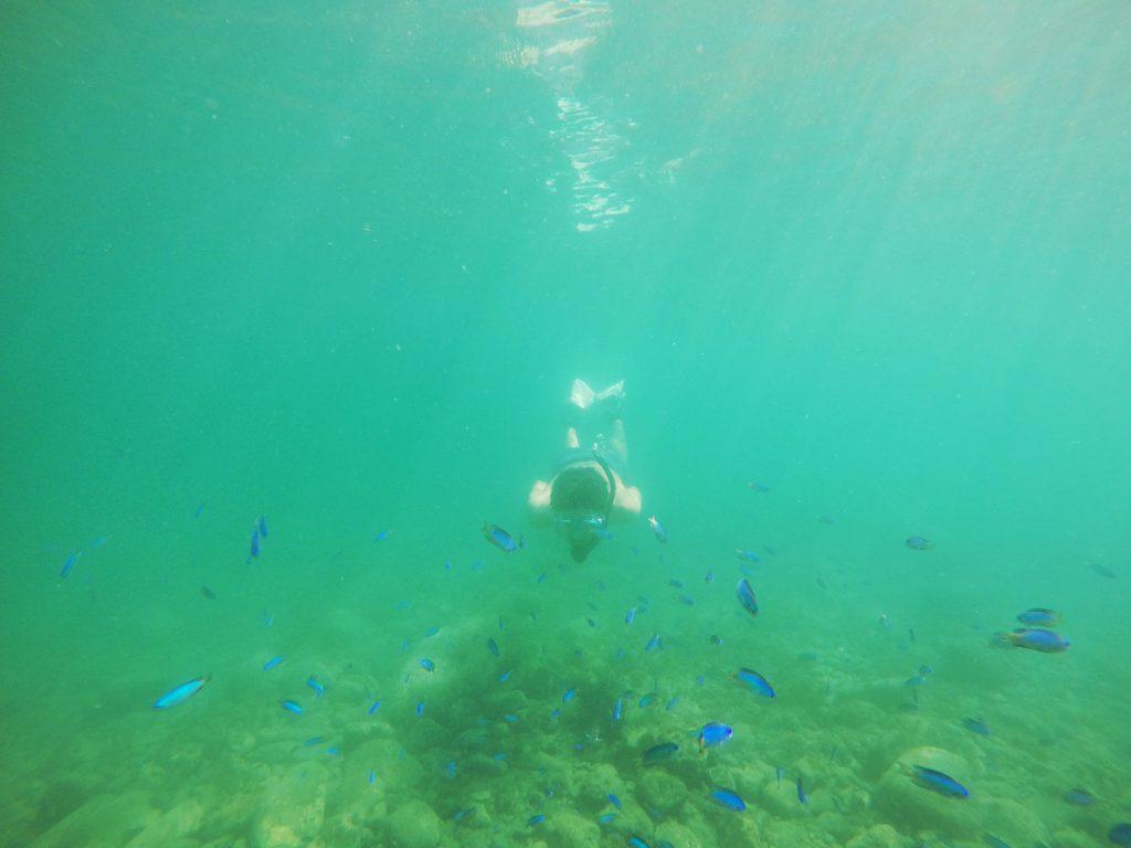 Snorkeling with blue fish in Nishiizu, Shizuoka