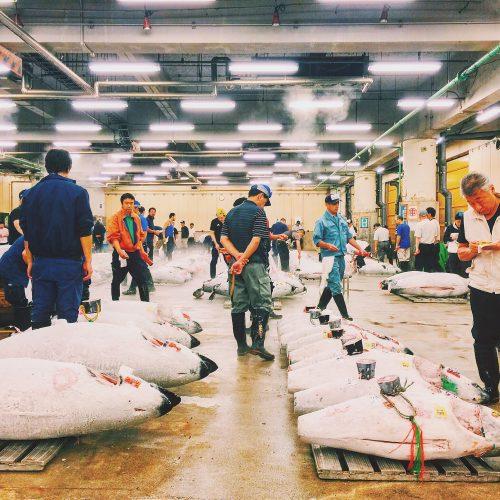 Tuna auction at Tsukiji Market in Tokyo, Japan